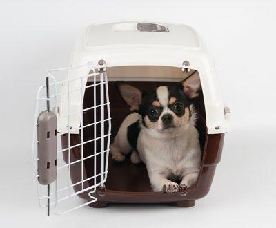 Enviar mascotas 1