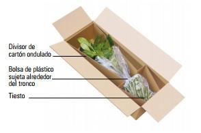 Embalaje plantas completas