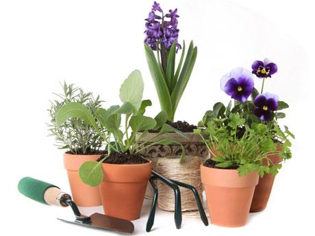 Envío de Plantas y flores por paquetería